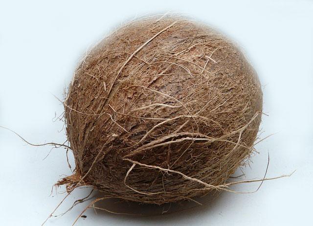 Kokosnuss fürs Dosenkegeln